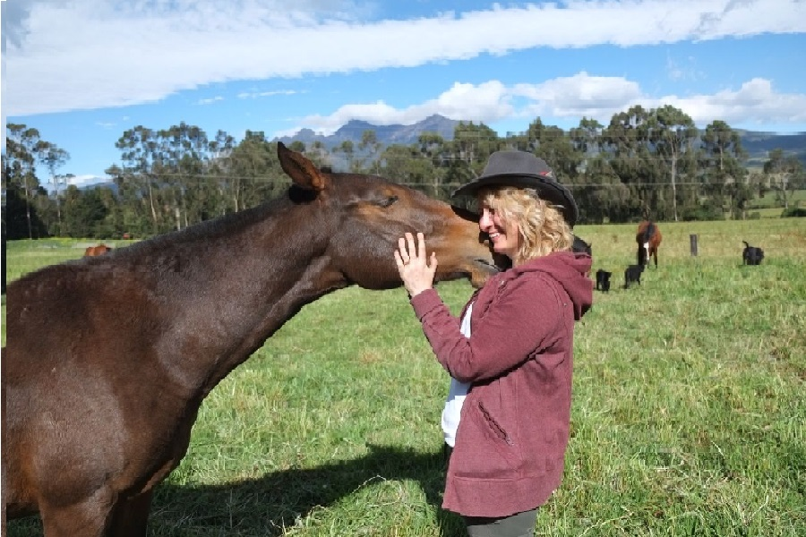 Interaction with horses